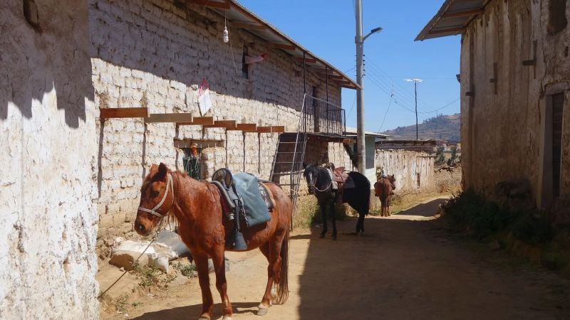 Horses stand at the ready in Huamantanga, an Andean village where people still use an ancient system called amunas to move wet-season water underground (Credit: Erica Gies)
